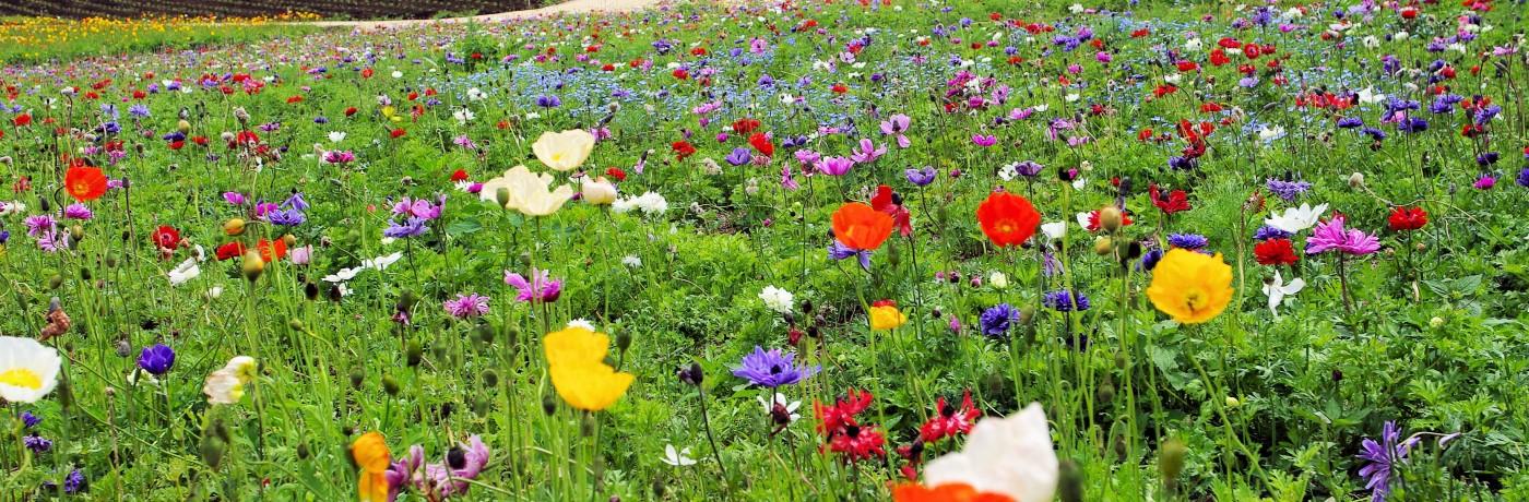 那須の花畑