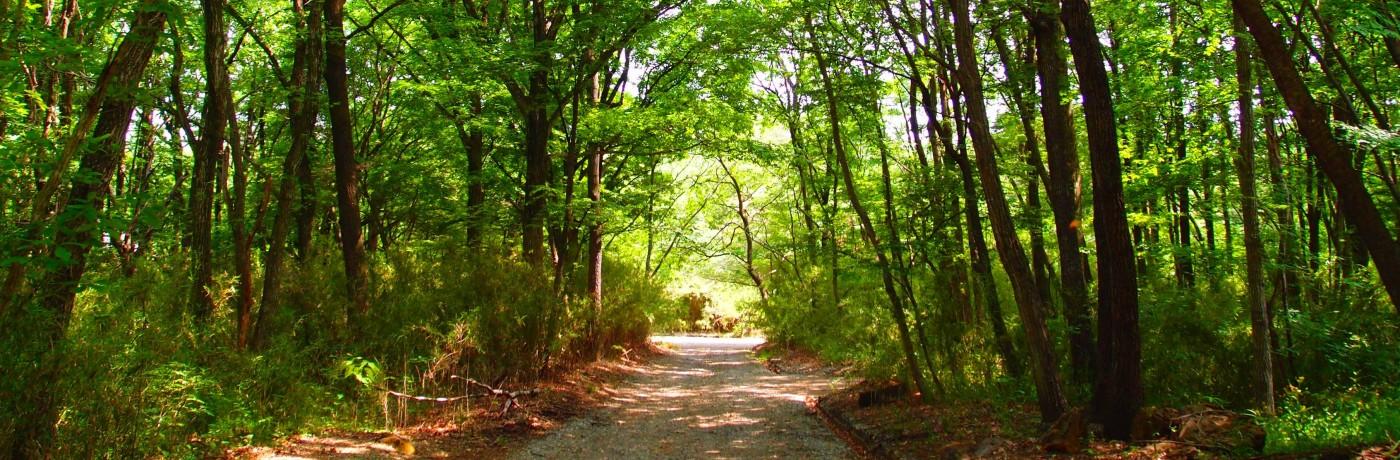那須の夏山の道